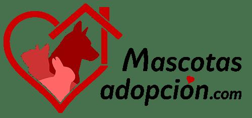 Mascotasadopcion.com, todo lo que se necesita saber para adoptar a una nueva mascota