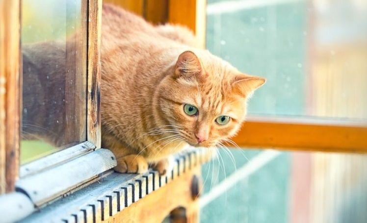Resultado de imagen para gato en la ventana