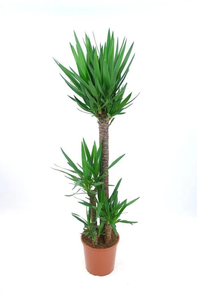 plante d interieur laquelle choisir