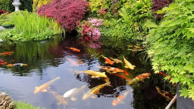 bassin de jardin quels poissons