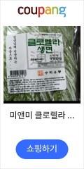 미앤미 클로렐라 생소면 1 kg 5-6인분 비빔국수 생면사리 샤브샤브면 콩국수 멸치국수, 1개, 1kg