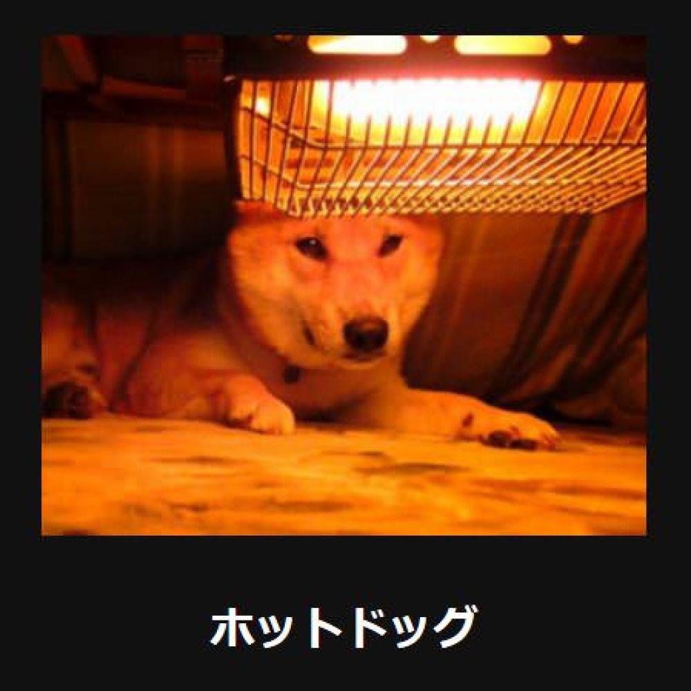 大喜利 犬11