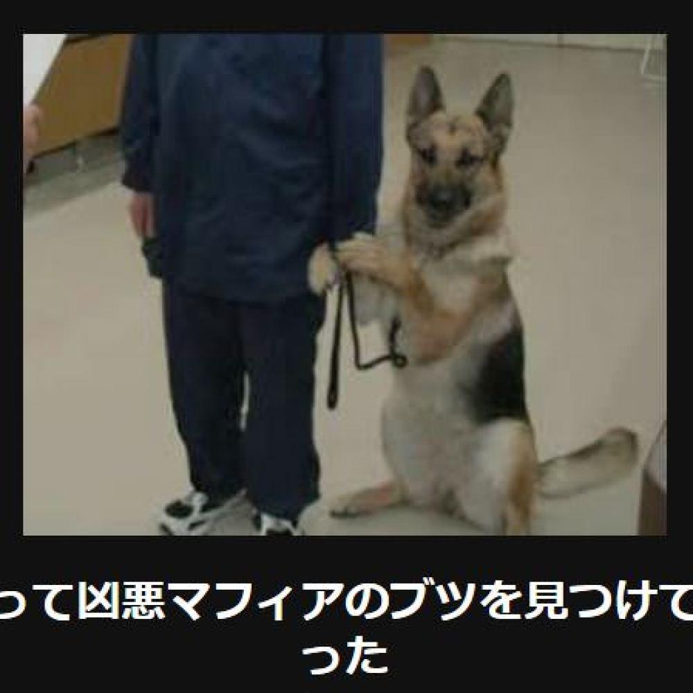 大喜利 犬10