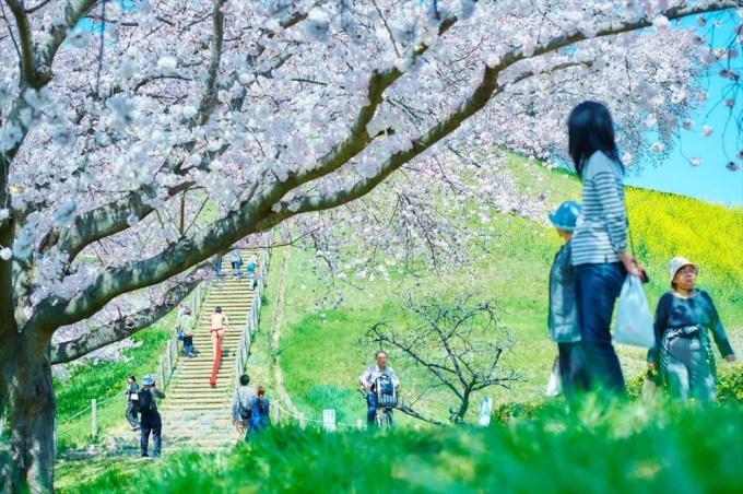 桜舞い散る中にふんどしでダンス~♪妙な凛々しさと美しい桜の「ふんどし日和」がツボ