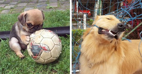 soccerdogs