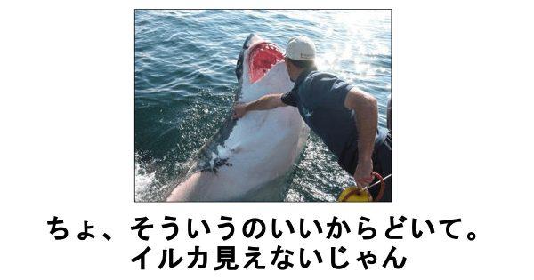 サメのボケて