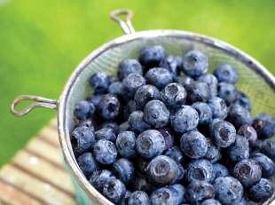 i mirtilli sono antiossidanti