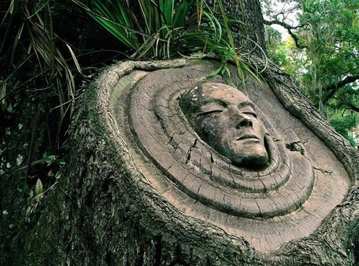 Forest Faces Tree Art