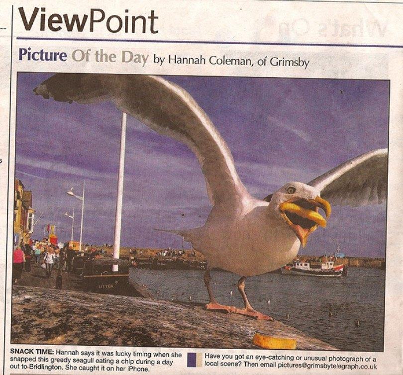 google buys seagull photo hannah huxford 8 - Já pensou ter uma foto sua comprada pelo Google? Ela conseguiu!