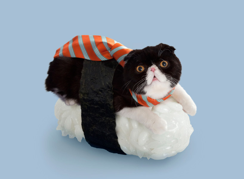 Felines Dress Up With Seaweed And Rice For Sushi Cats Series
