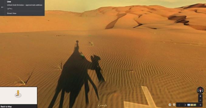 google hires camel to film liwa desert 'street' view