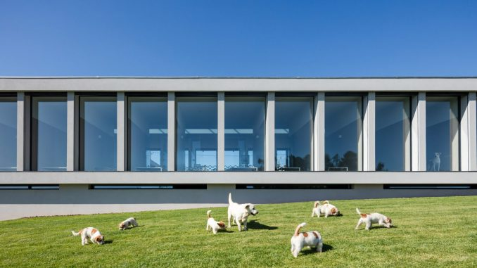 Hotel for cats and dogs in Portugal