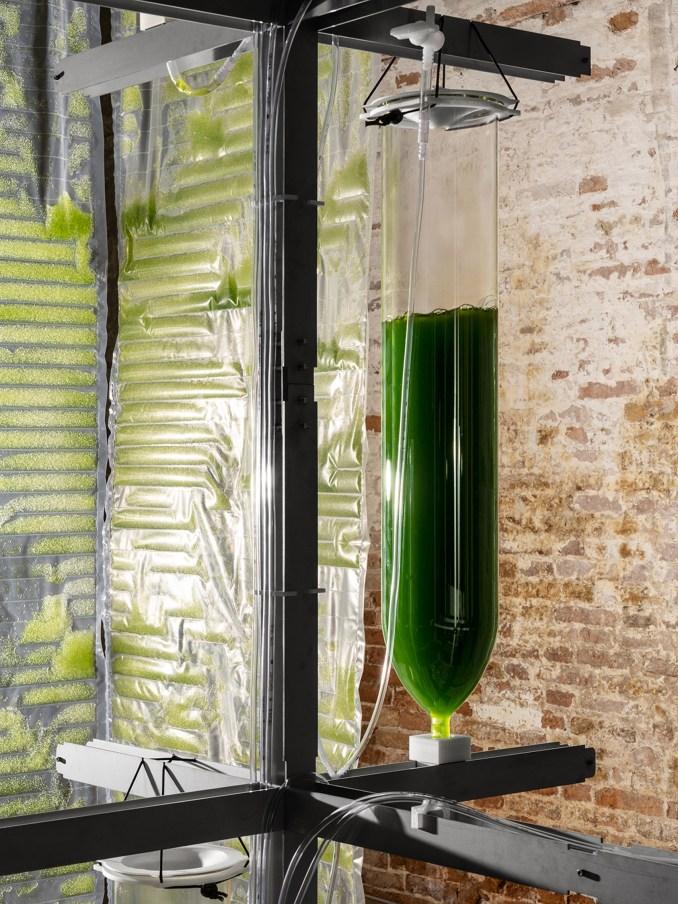 DIY home kit for growing edible algae