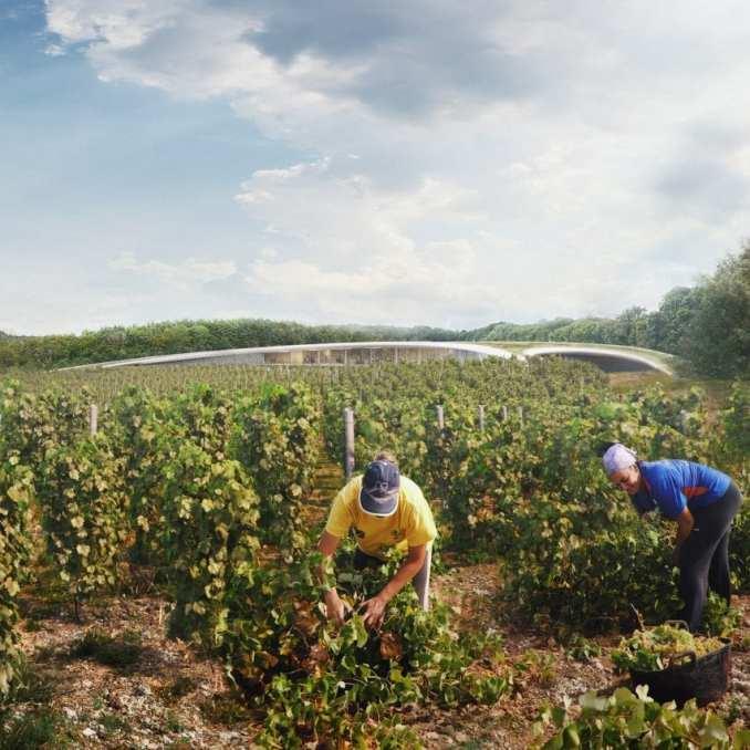 A visual of a vineyard