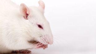 Testing Bulgarian vaccine on mice, $ 200 each