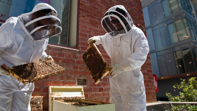 """""""Bees are reasonably gentle creatures and not the crazed stinging predators that some people think."""""""