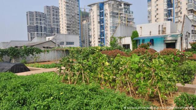 An urban garden on a rooftop in China
