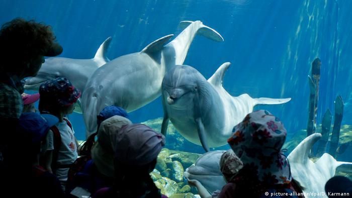 В дельфинарии Нюрнбергского зоопарка