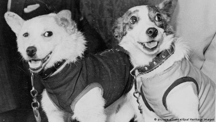 Belka and Strelka (picture-alliance/dpa/ Heritage Images)