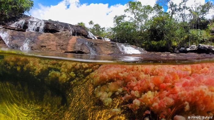 Colombia cuenta con 59 áreas naturales que pertenencen al Sistema de Parques Nacionales Naturales.