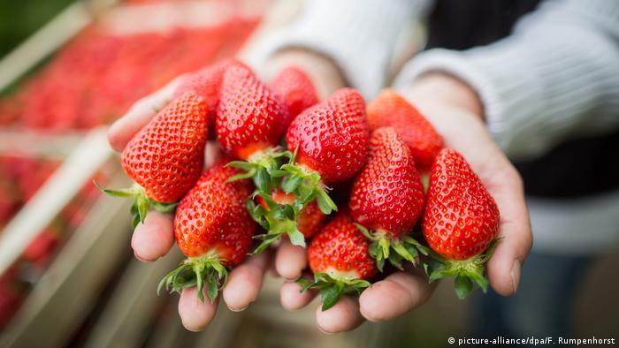 Strawberries (picture-alliance / dpa / F. Rumpenhorst)