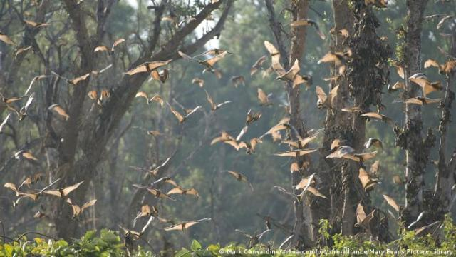 Bats flying in a forest in daytime