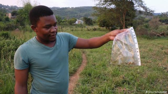 Martin Boima holds a bag filled with freshly caught grasshoppers, which will be sent for genetic barcoding