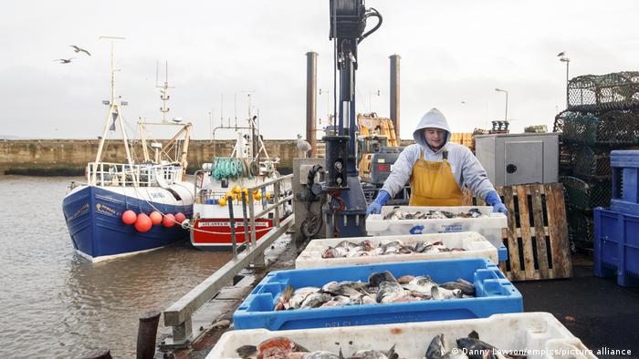 Fishing bait being unloaded at Bridlington Harbour in Yorkshire