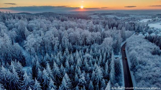 Snow covered tree tops in central Germany, near the city of Frankfurt