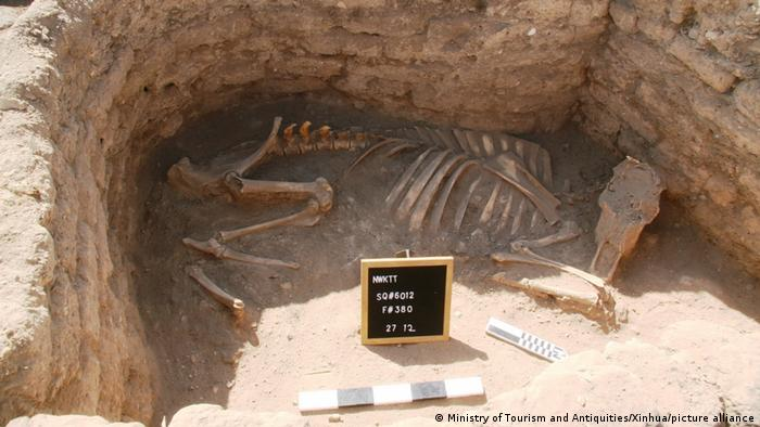 Un esqueleto de animal desenterrado.