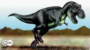 Scientists discover that billions of T. rex existed on Earth  DW