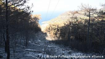 Καμμένο δάσος στη Μούγκλα