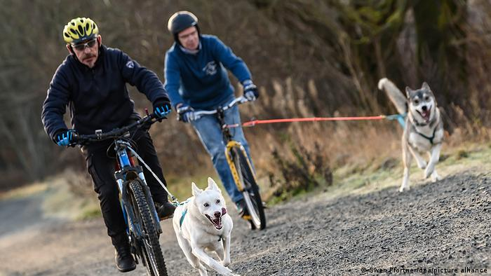 Two people bike with their dogs on a path.