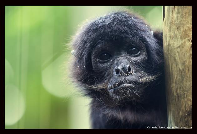 Cortesía Zoológico de Barranquilla
