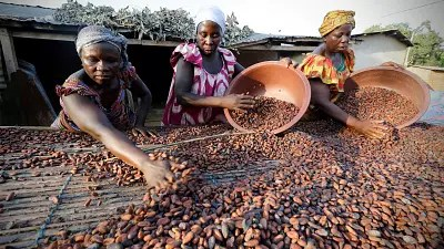 Image result for Ivory Coast slashes Cocoa farmers' price for mid-crop