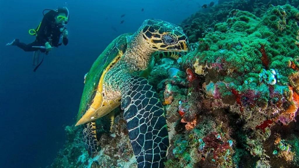 Seychelles, an archipelago in the Indian Ocean