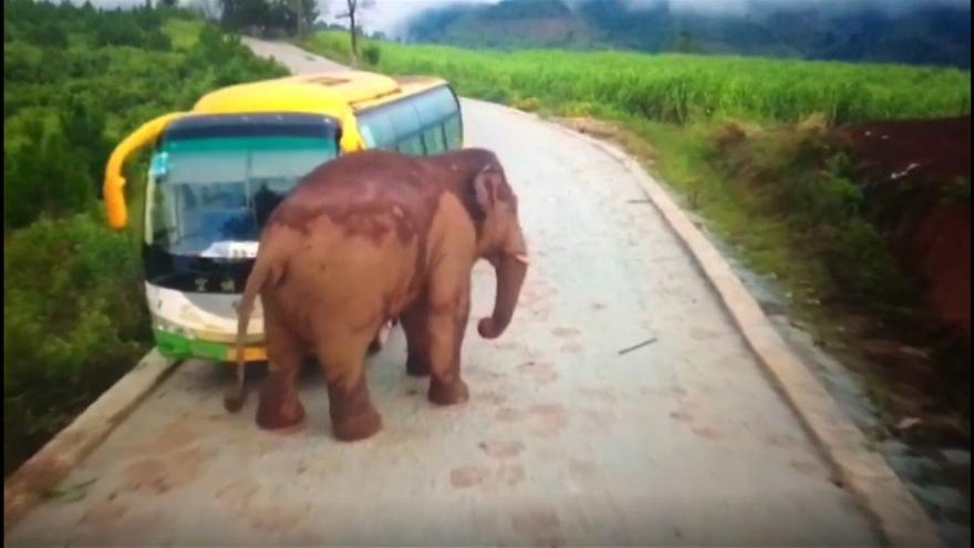 Image result for elephant attacks