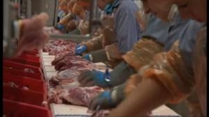 Más de 650 casos de covid entre los trabajadores de un matadero en ...