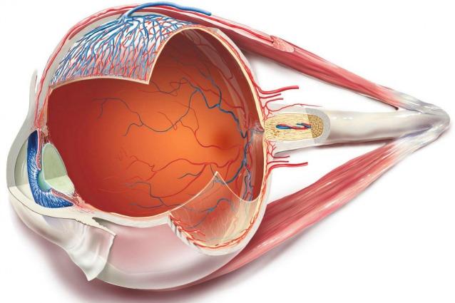 L'occhio bionico che spegne il buio e restituisce la vista.