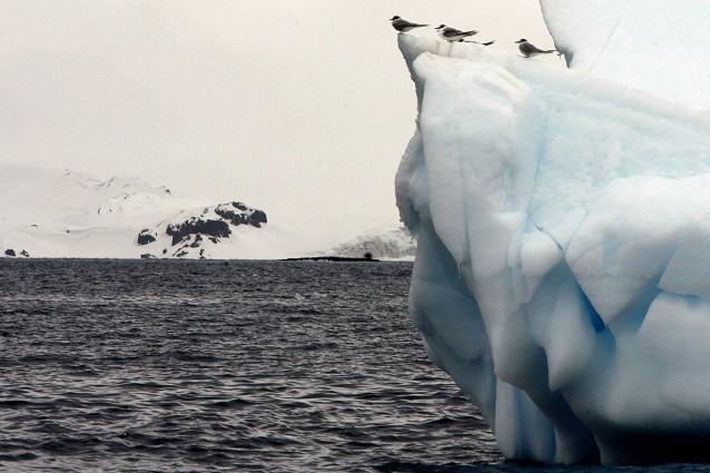 Sempre meno incontaminato, l'Antartide invaso da piante aliene.