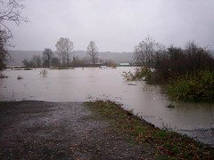 flood_Picture 010