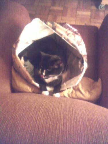 Gawain in a bag.