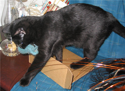 Chatton noir tenant un échantillon de tricot dans sa gueule - Black kitten holding a knit sample in his mouth