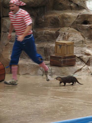 Pirate Otter