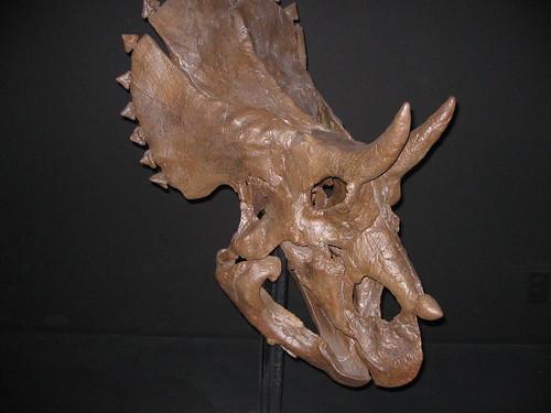 Museum of the Rockies - MuseumOfTheRockies 020