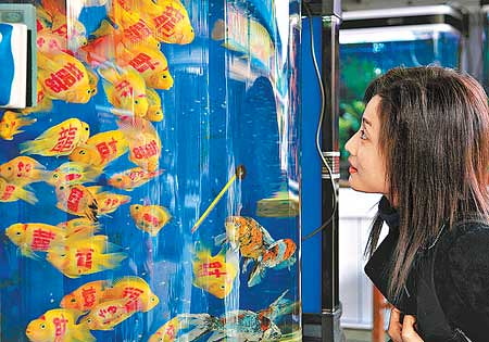 These tropical fish have been very popular as people buy them for Fengshui