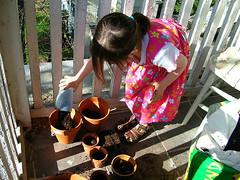 Potting Plants
