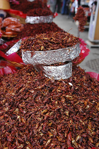 Oaxaca - 04 Salted Grasshoppers