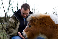 Miniature new forest pony