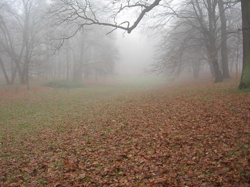 Mgła w Parku Szczytnickim (I)